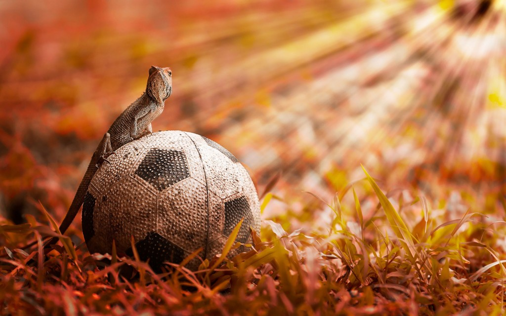Chameleon-Sitting-Over-Soccer-Ball-in-the-Field